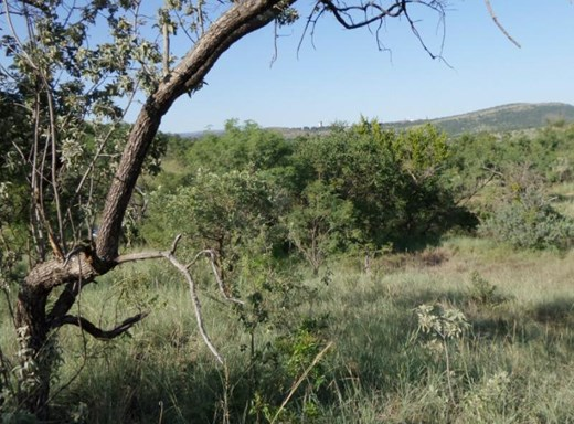 Agricultural Vacant Land for Sale in Lanseria