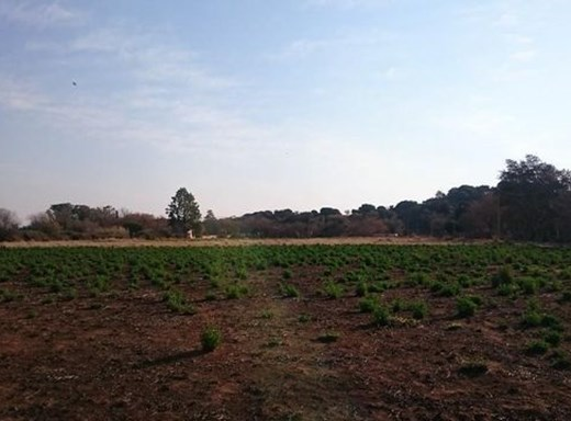 Vacant Land for Sale in Oudorp