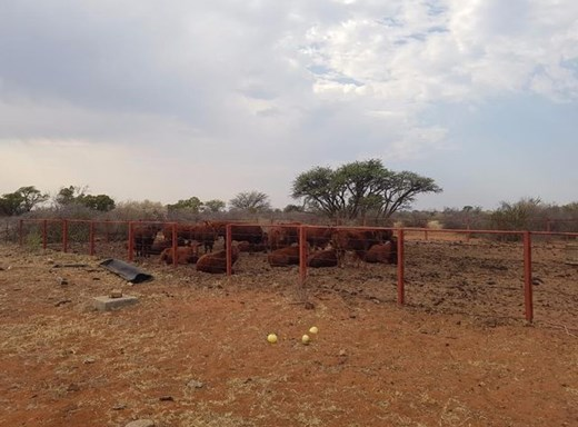 Farm for Sale in Vryburg
