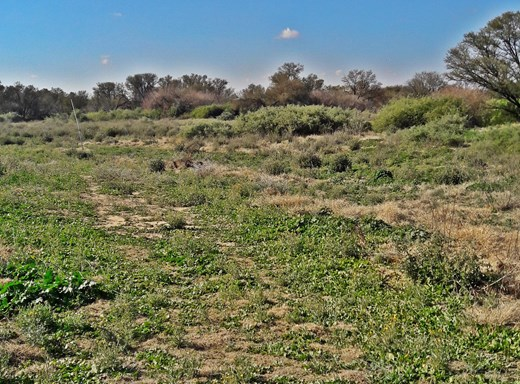 Commercial Vacant Land for Sale in Bainsvlei