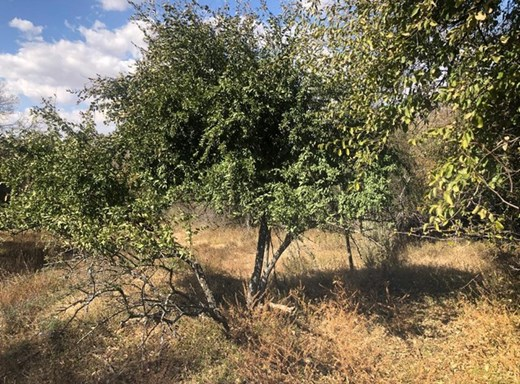 Vacant Land for Sale in Parys