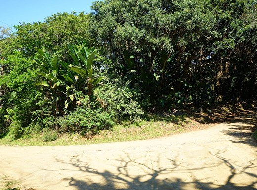 Vacant Land for Sale in Palm Beach