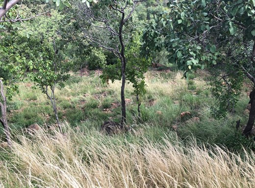 Vacant Land for Sale in Cashan