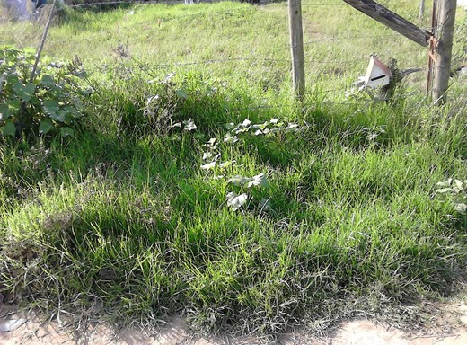 Vacant Land for Sale in Potsdam