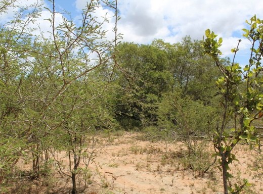 Vacant Land for Sale in Moditlo Nature Reserve