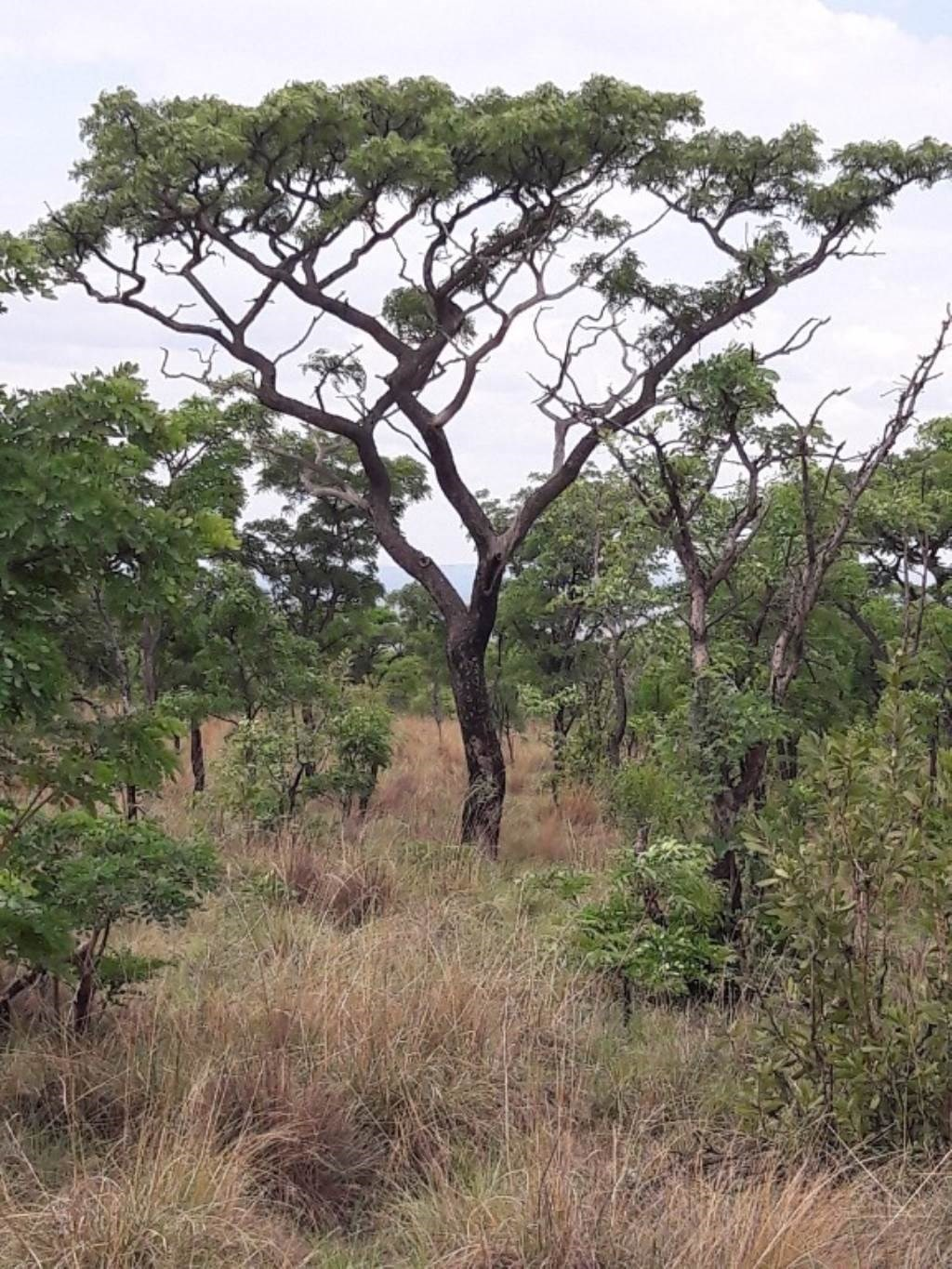 Vacant Land for Sale in Vaalwater
